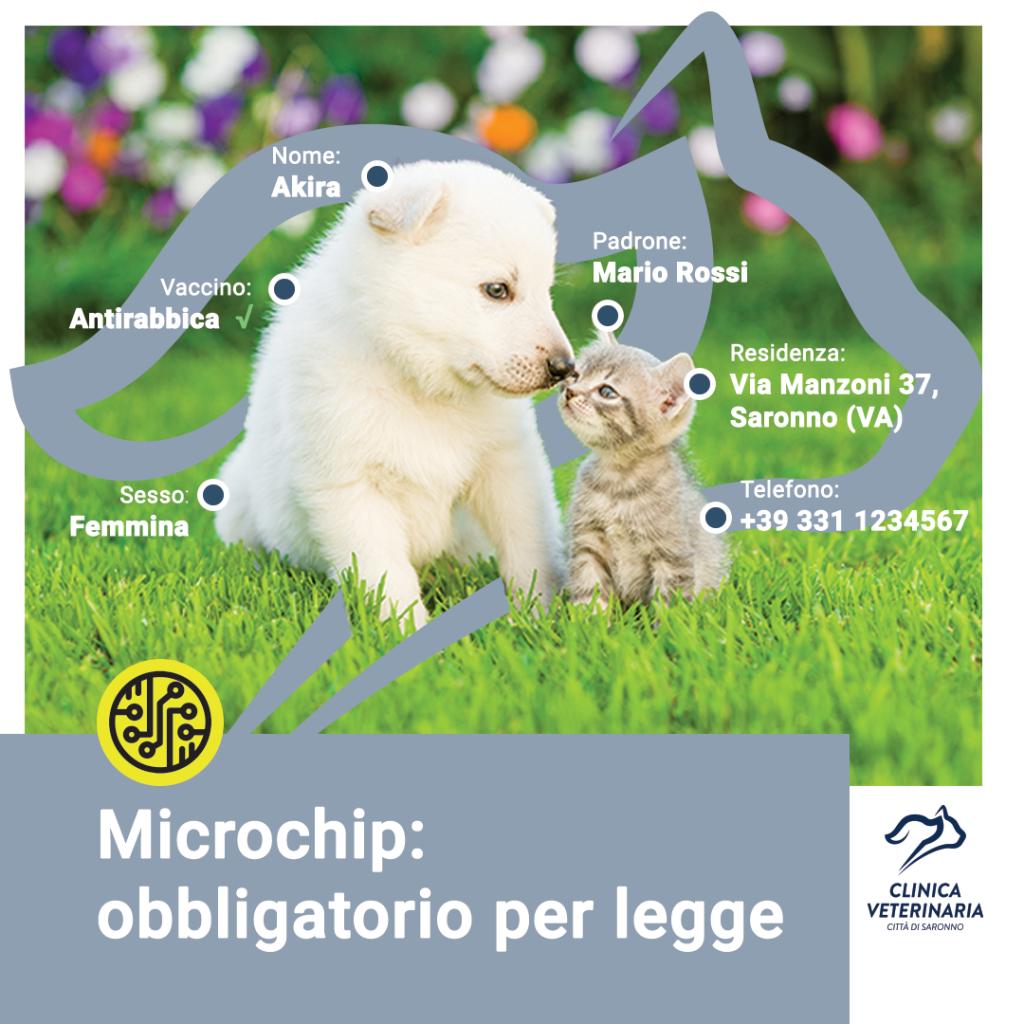 Microchip: ecco perché è necessario anche per il gatto