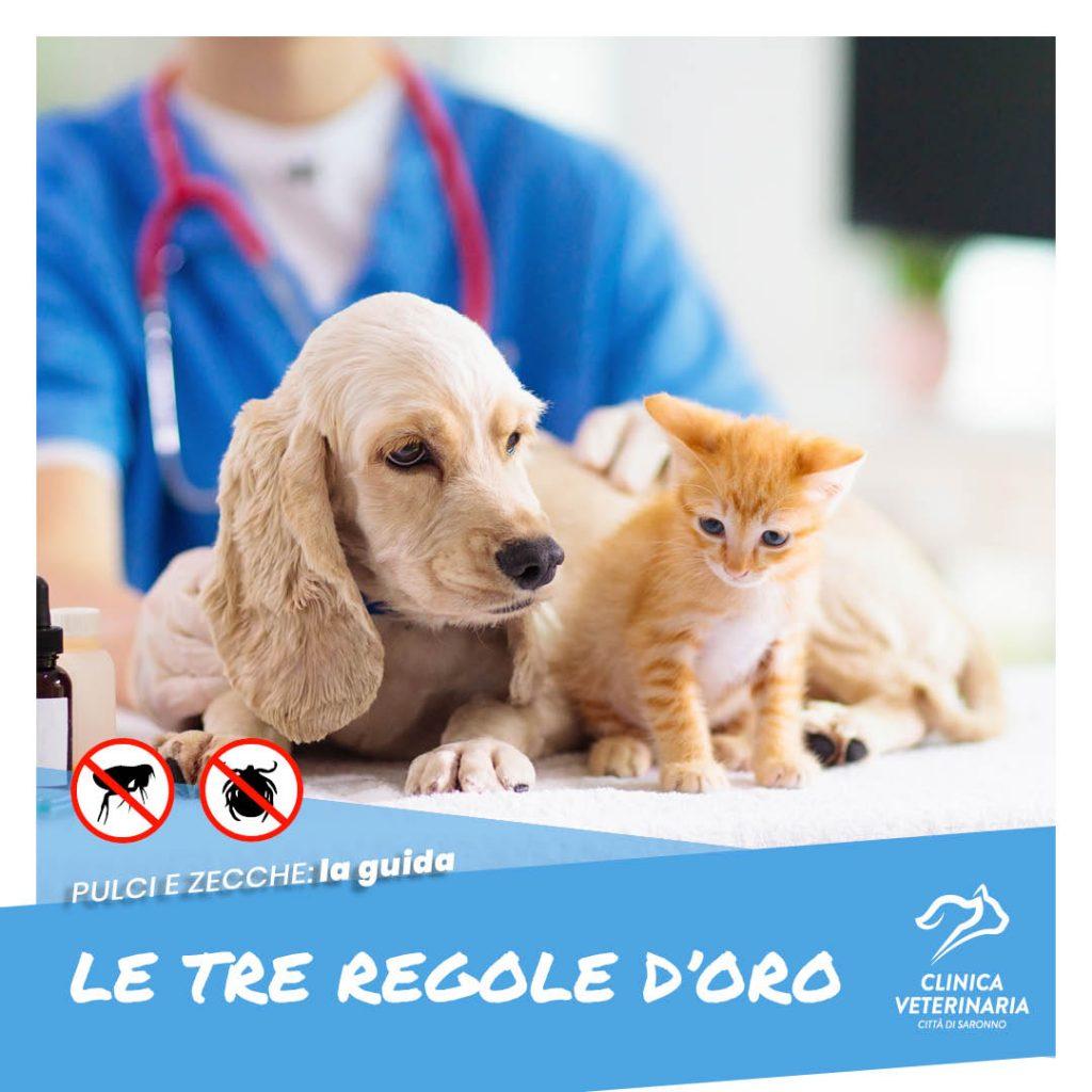 Antiparassitari: le 3 regole d'oro del veterinario