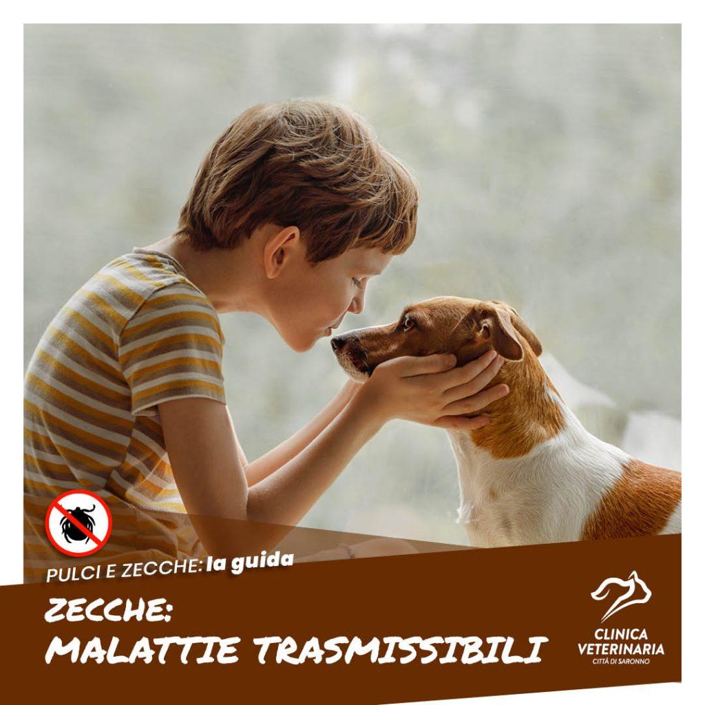 Zecche: malattie trasmissibili