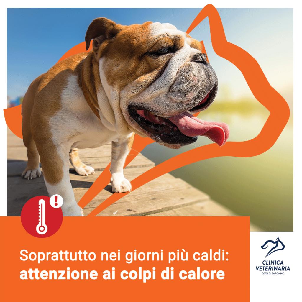 Colpo di calore nel cane: possibile evitarlo?