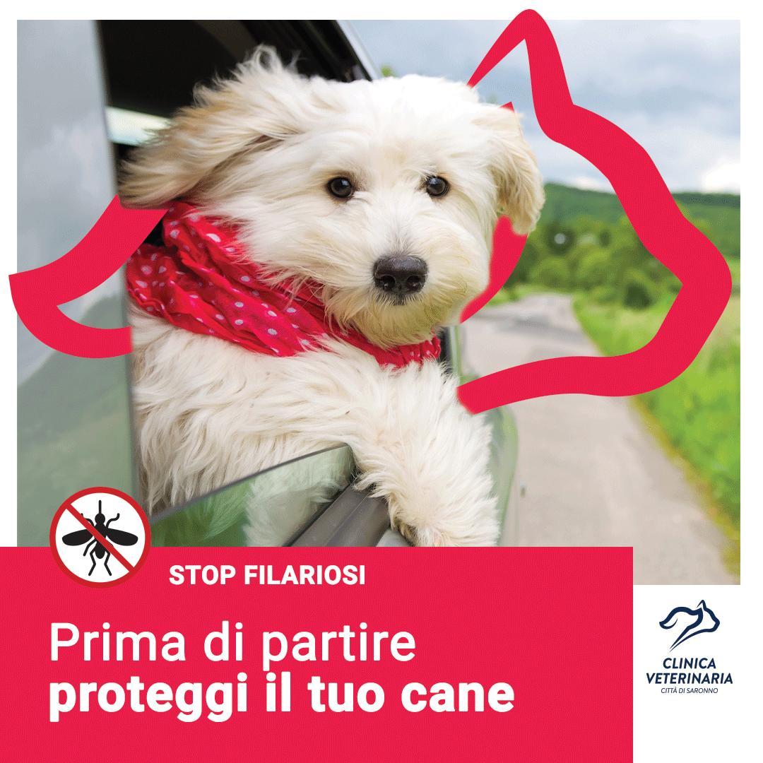 Domande Al Veterinario Cane la filariosi è diffusa solo al nord? - clinica veterinaria