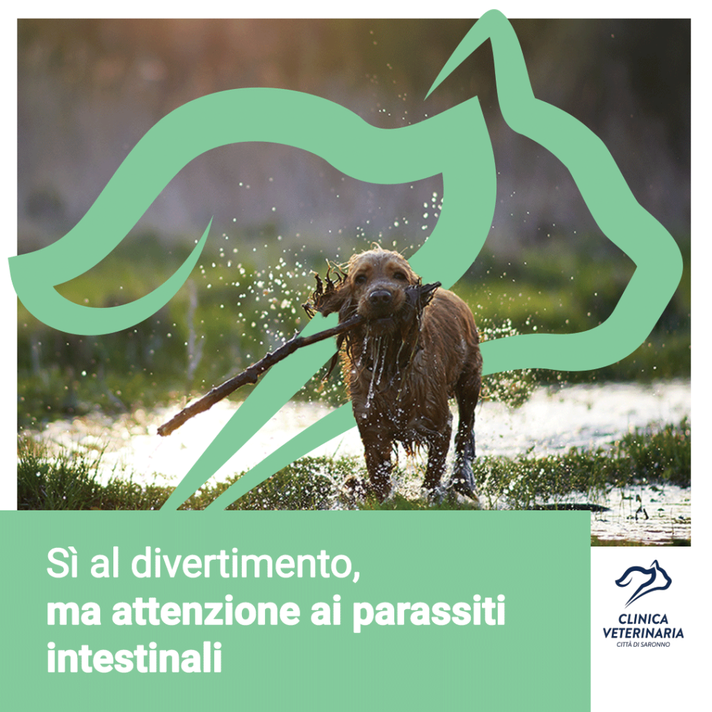 Parassiti intestinali: come prevenirli?