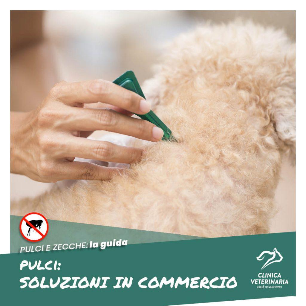 Prevenzione pulci: i rimedi in commercio