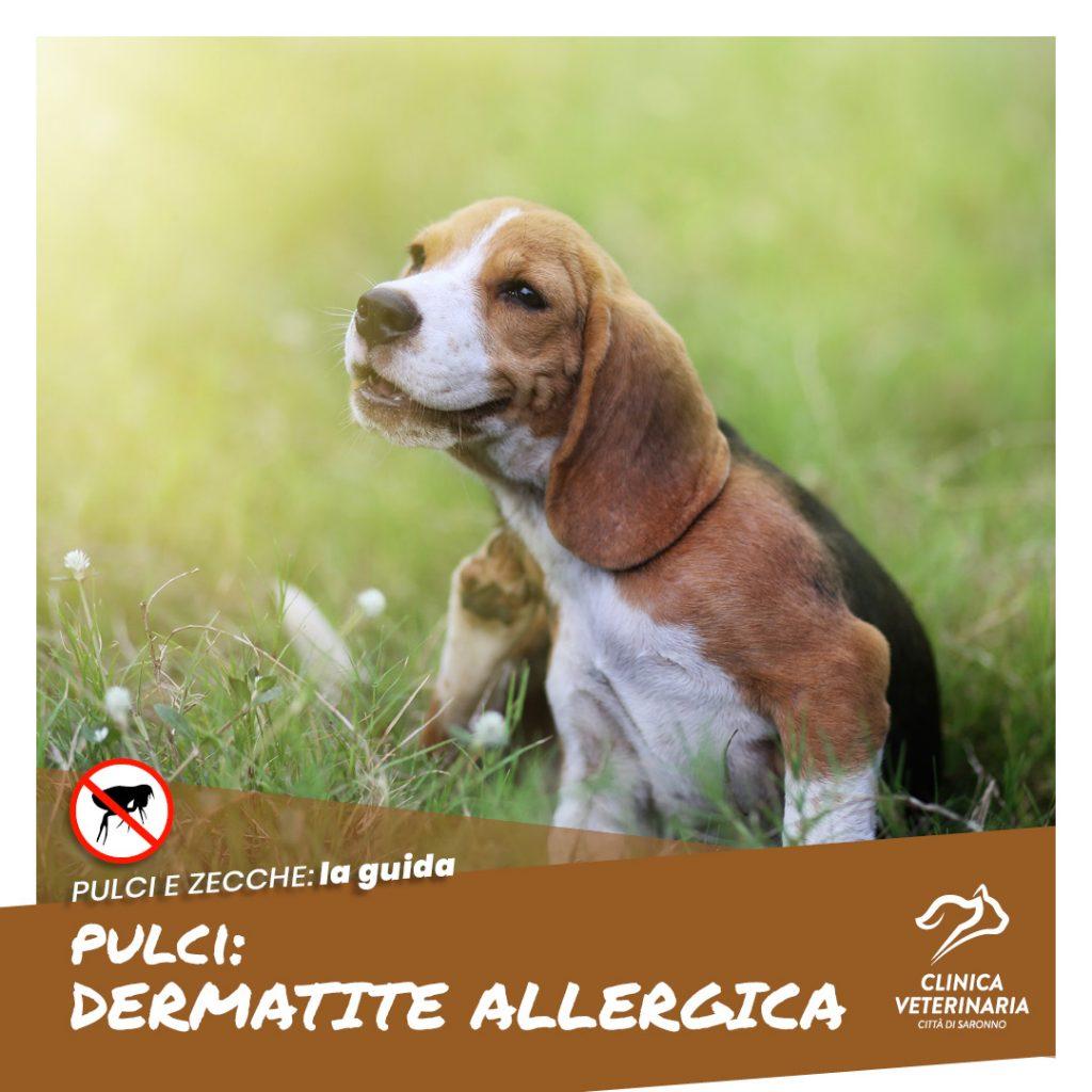 Dermatite allergica: una delle reazioni più diffuse delle pulci