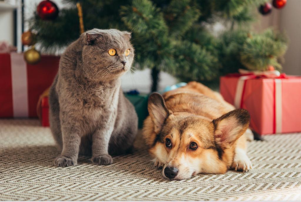 Natale con cane e gatto: i nostri consigli per le feste