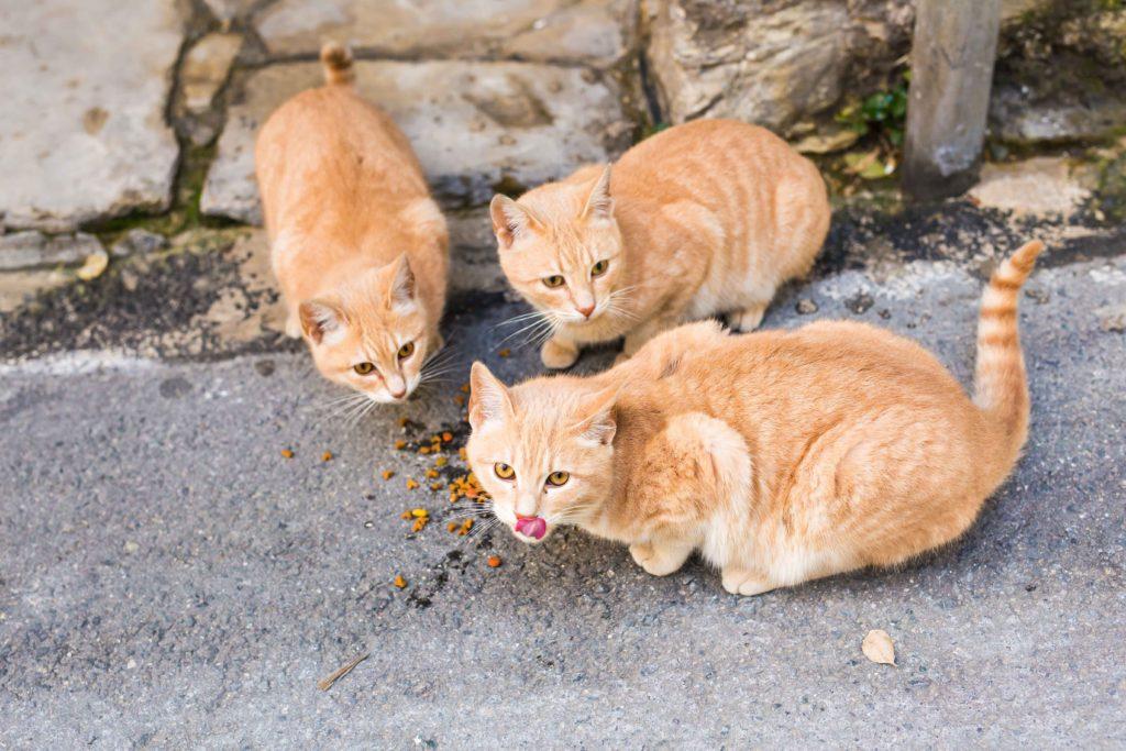Ingestione di sostanze tossiche nei gatti: a cosa stare attenti