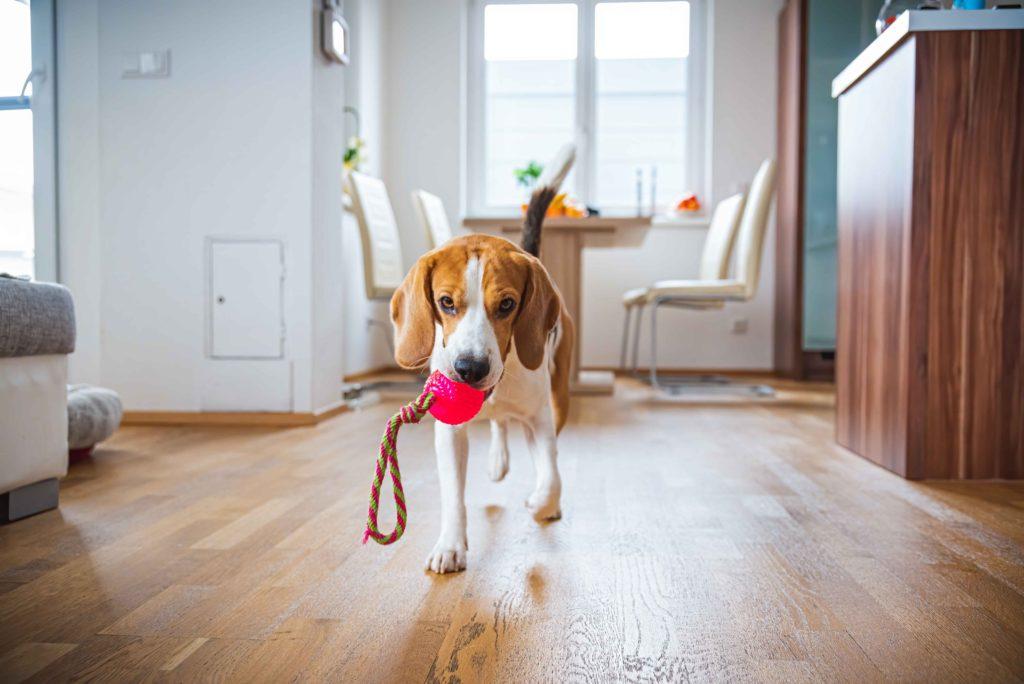 Giochi per cani: come mantenerlo attivo in casa