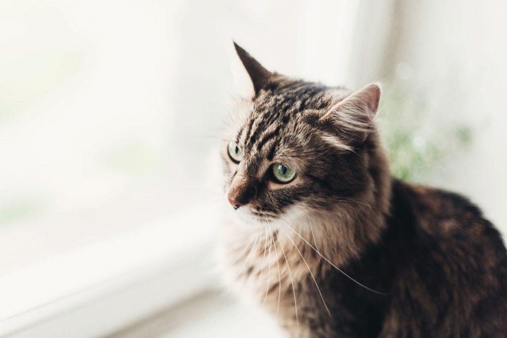 Gatto: meglio farlo vivere dentro o fuori casa?