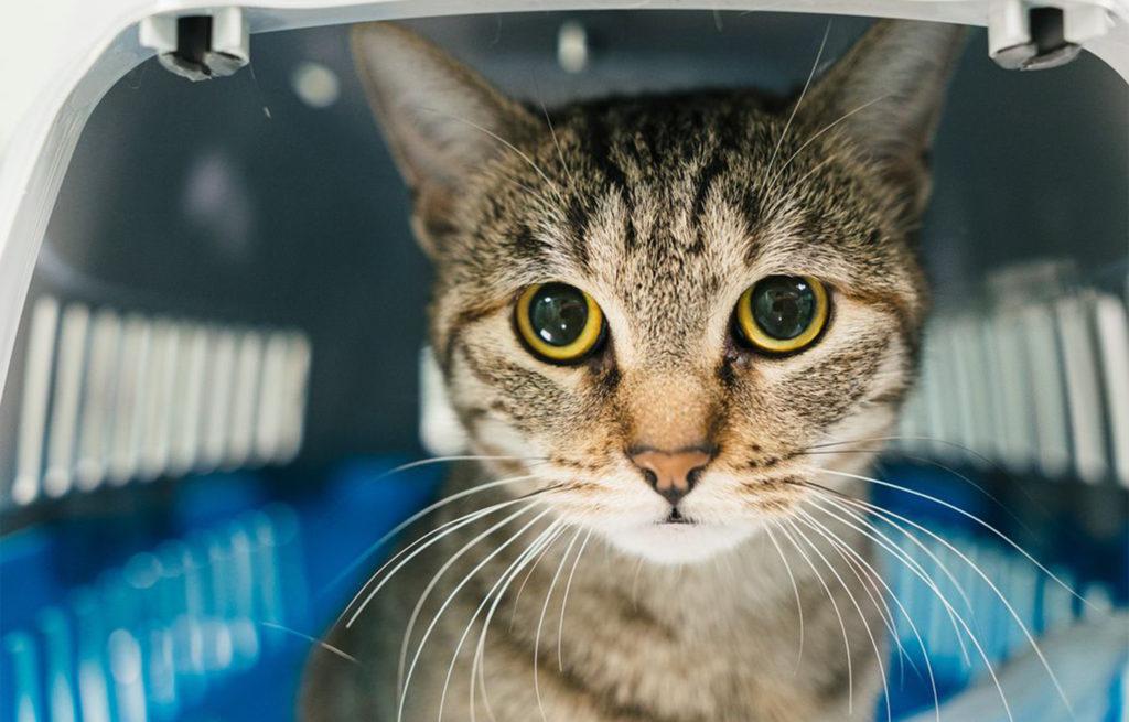 Gatti e parassiti: cura e igiene
