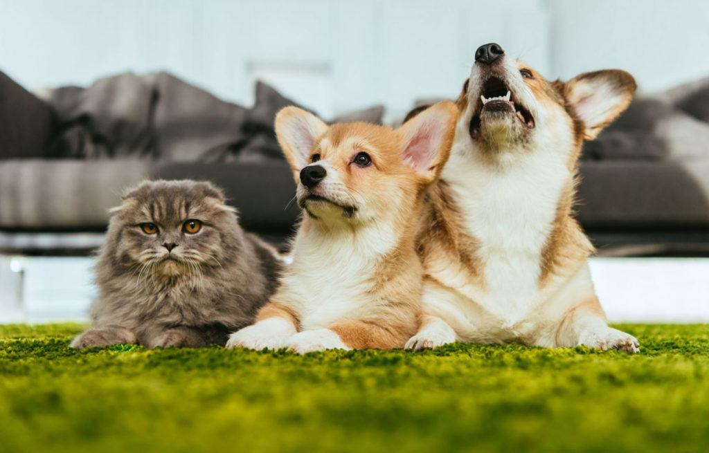 I rischi della primavera per cani e gatti
