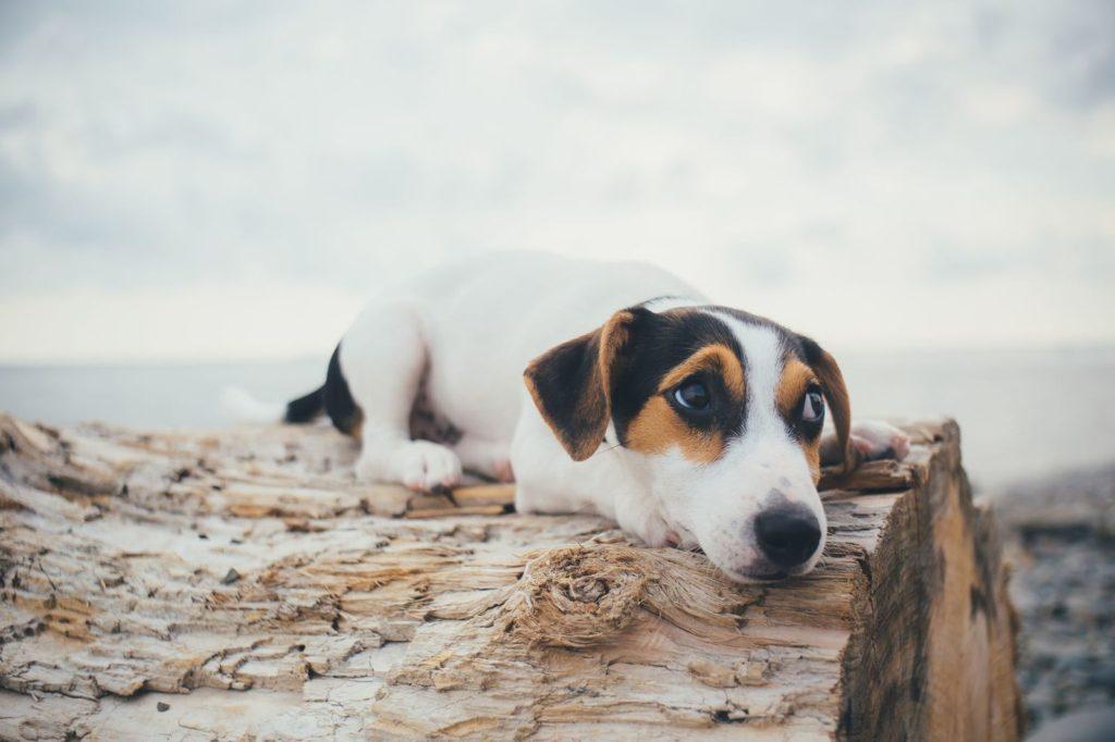 Il mio cane ha paura di tutto: cosa fare?