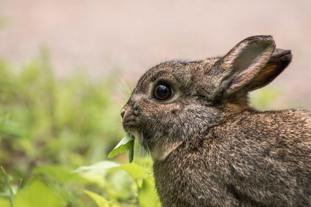 Alimentazione corretta del coniglio: cosa deve mangiare?