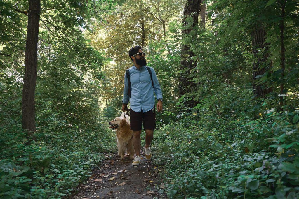 Passeggiate nei boschi: come comportarsi?